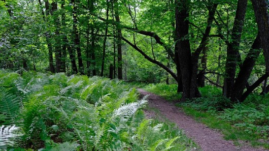Trail leading through the trees and bush of Beaudry Provincial Park.